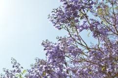 flower-tree-919056_640