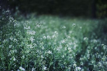 flowers-791826_640